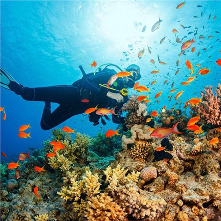 Tour 4 Đảo Nha Trang Lặn Biển